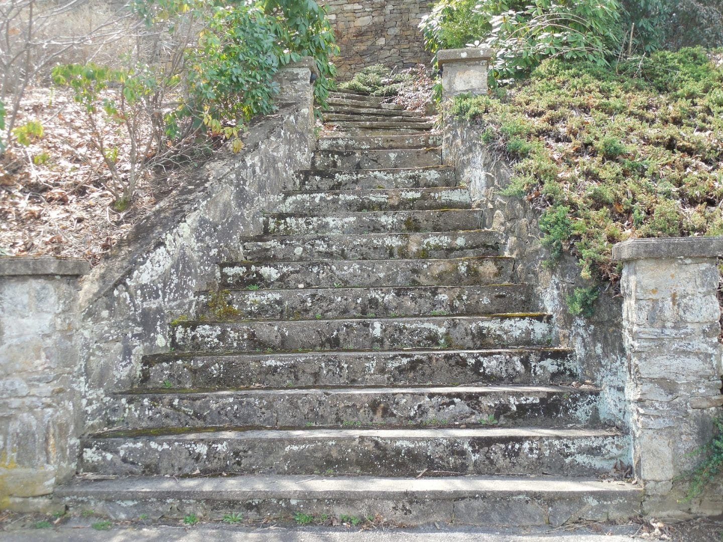Removing Algae From Your Patio Path Or Paving Promain
