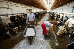 Dairy Farm Floor